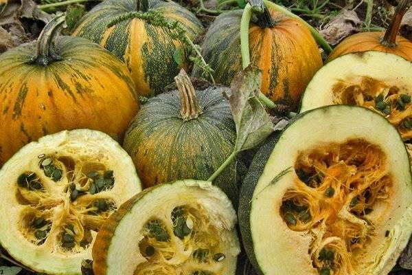 Голосемянная тыква: описание, посадка, выращивание, отзывы