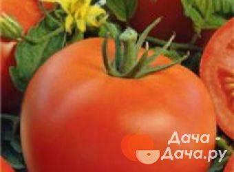 Характеристика и описание сорта томата астраханский
