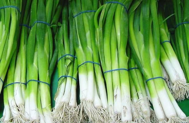 Лук-батун апрельский: выращивание на подоконнике