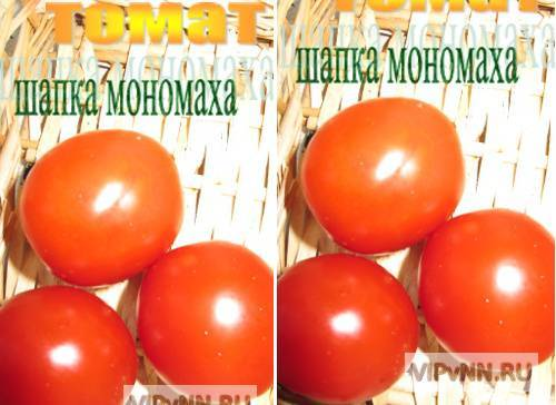 Помидоры «шапка мономаха»