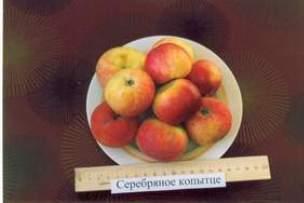 """Яблоня """"серебряное копытце"""": описание сорта и агротехника выращивания"""