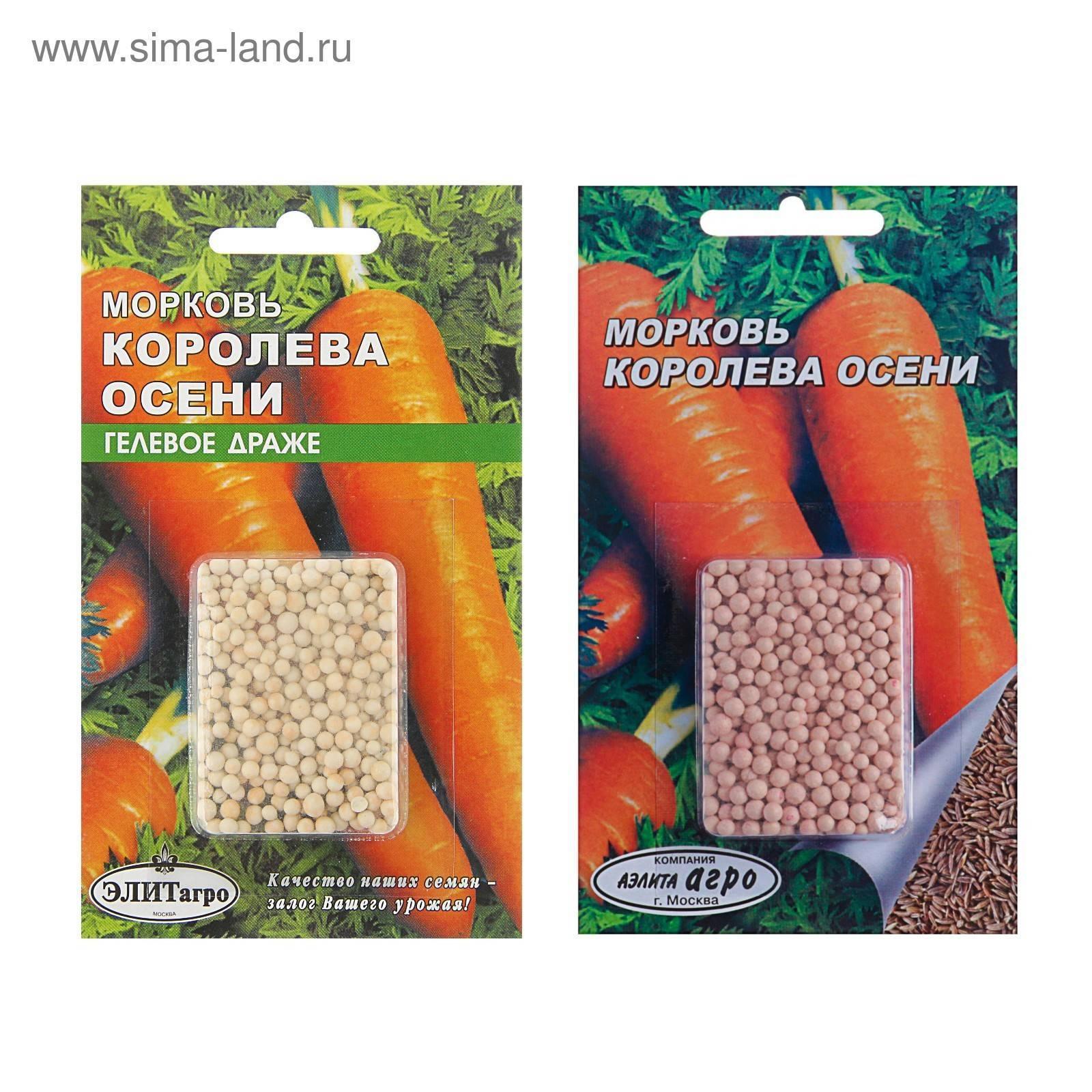 Как правильно выращивать позднеспелый сорт моркови королева осени