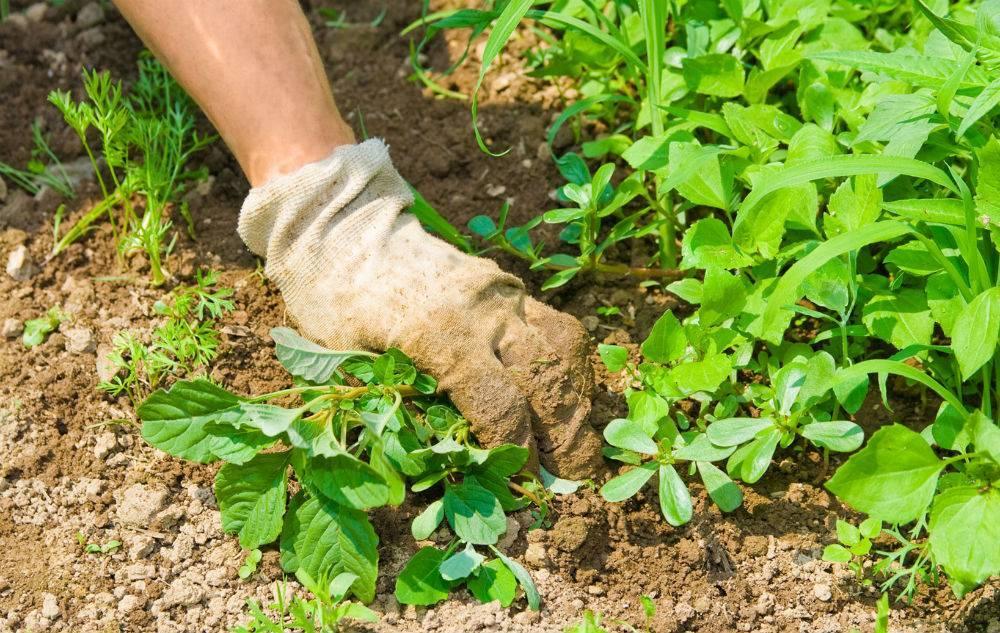 Как избавиться от сорняков и травы навсегда: самые эффективные методы