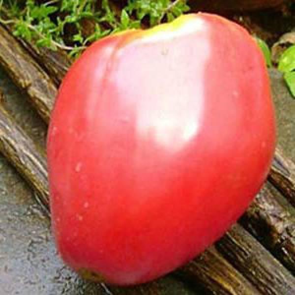 Крупные и сладкие помидоры орлиный клюв - шедевр сибирских селекционеров