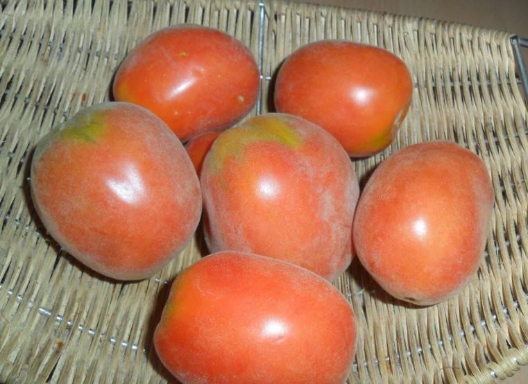 Описание сортов яблони (прима, ромус 2, приам)