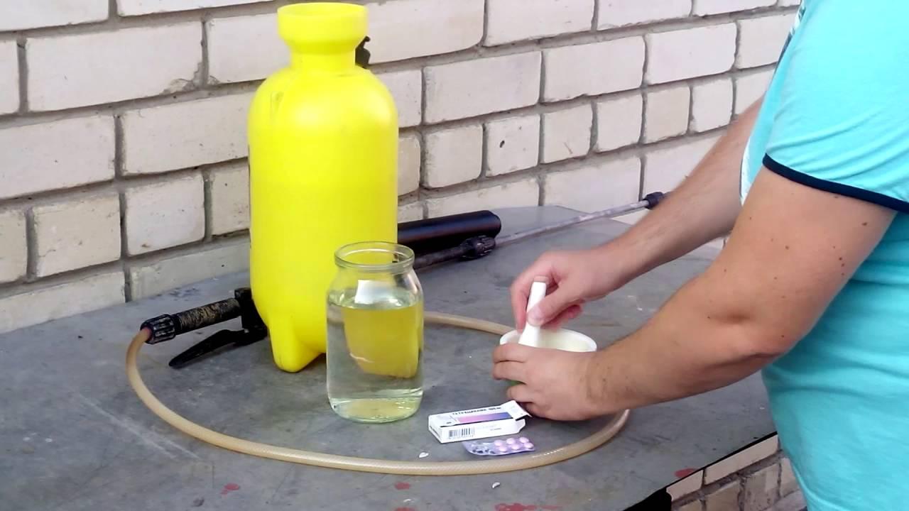 Как лечить бактериальный ожог груши