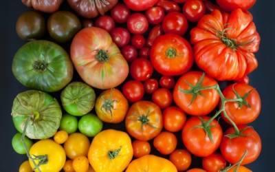 Низкорослые сорта томатов для теплицы устойчивые к фитофторе. томаты, устойчивые к фитофторозу и болезнями для теплиц