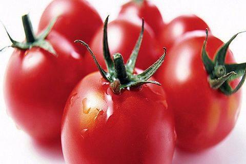 Описание томатов «мишка косолапый»: урожайность, вкус, устойчивость к болезням