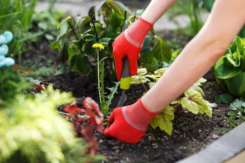 Как без прополки и химии бороться с сорняками и травой: методы и средства