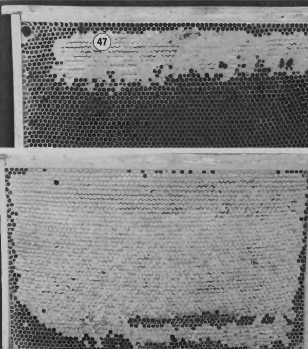 Секреты и особенности содержания пчел в многокорпусных ульях
