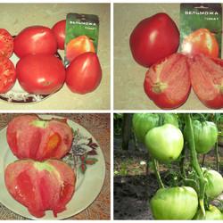 Характеристики и описание сорта томата вельможа