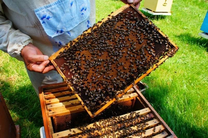 Подкормка пчел весной: дело хлопотное бочка мёда