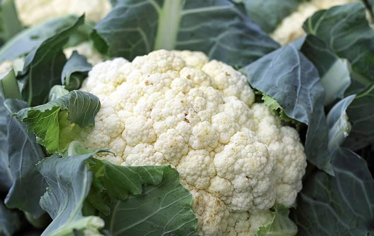 Польза и вред цветной капусты для здоровья | польза и вред