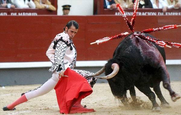 Различают ли быки цвета. действительно ли быки ненавидят красный цвет? почему быки бегут на красный цвет