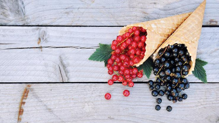 Красная смородина: польза и вред, что лечит, полезные рецепты