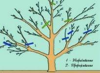 Обрезка плодовых деревьев для начинающих — всё самое важное про эту задачу