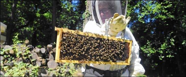 Советы по уходу за пчёлами весной