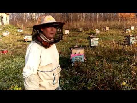 Бипин-т для пчел: инструкция по применению, дозировка, когда обрабатывать?