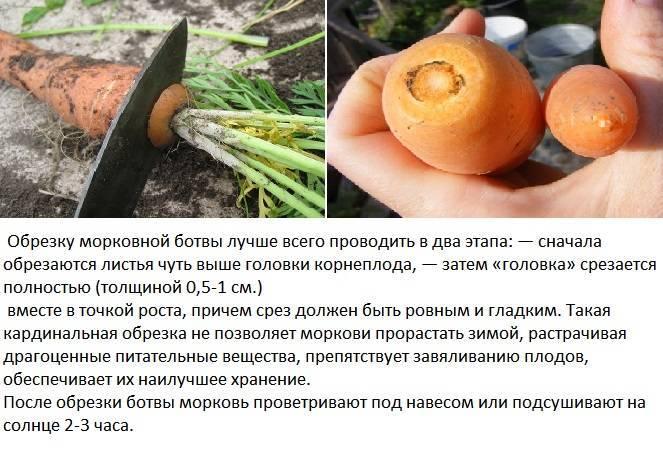 Советы, как сберечь на зиму урожай моркови. инструкция, как хранить овощ в банках в погребе и в холодильнике