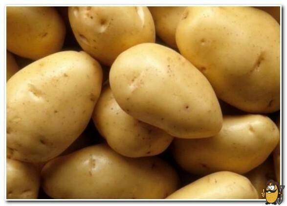 """Картофель """"янка"""": описание сорта и фото"""