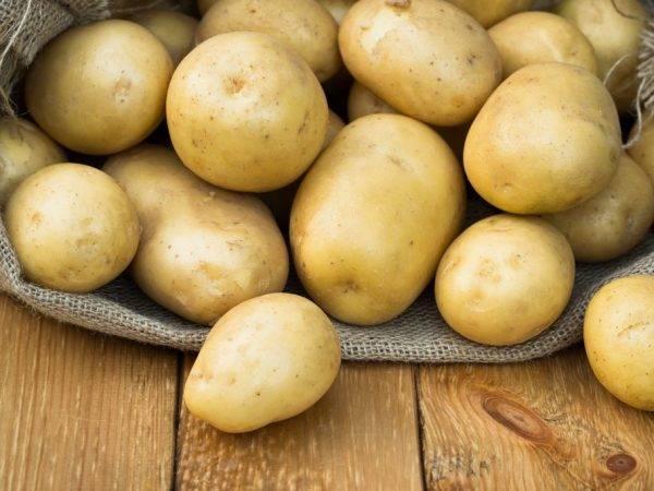 Картофель ласунок описание сорта фото
