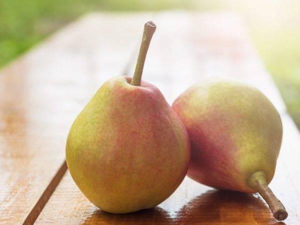 Неоценимая польза груш и возможный вред для организма