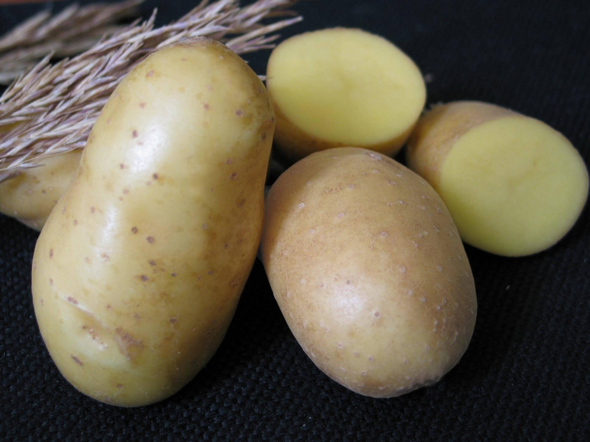 Картофель невский – «второй хлеб» русских полей