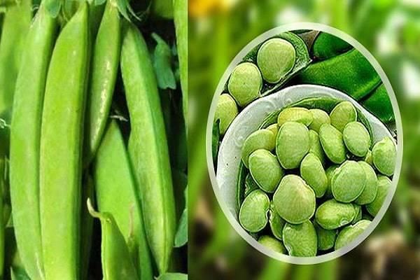 Фасоль лимская сладкий боб описание выращивание отзывы