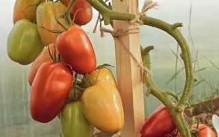 Описание гибридного сорта томата царское искушение