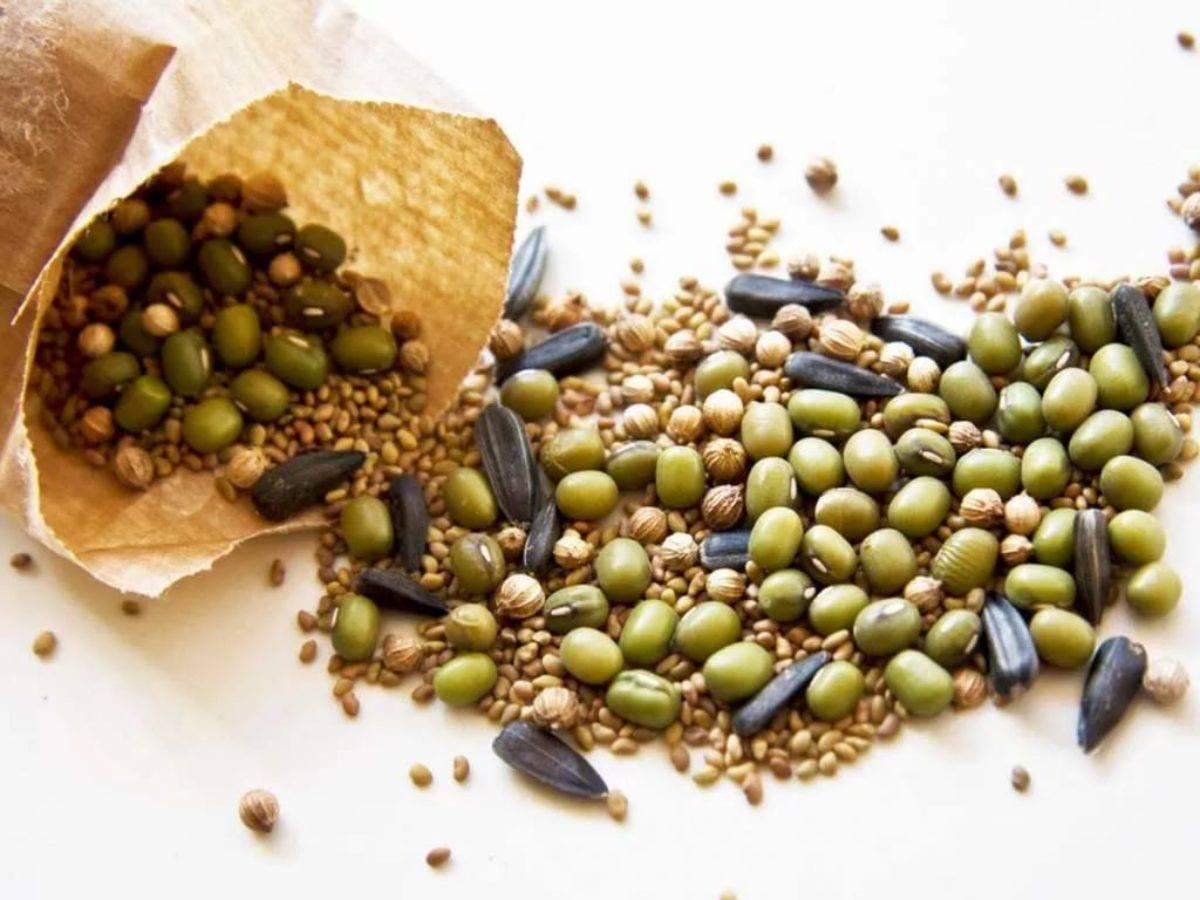 Правила и сроки посева семян баклажанов на рассаду