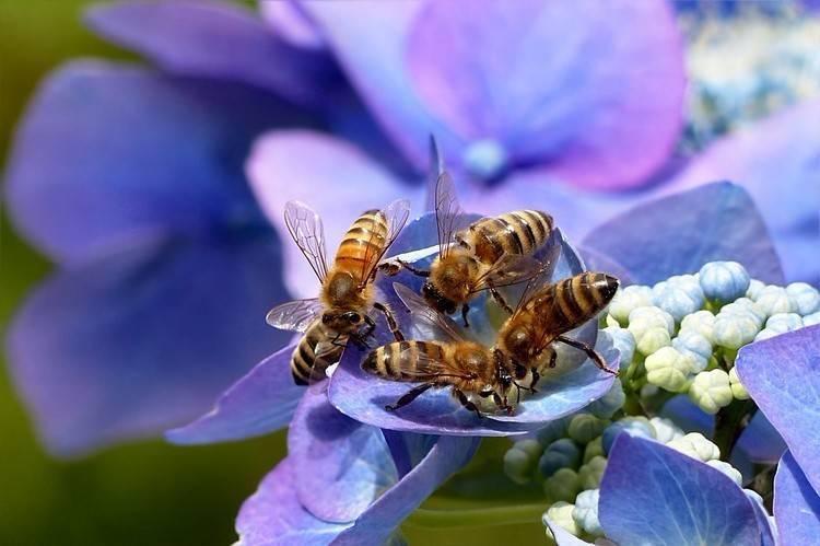 Интересные факты о пчелах :: инфониак