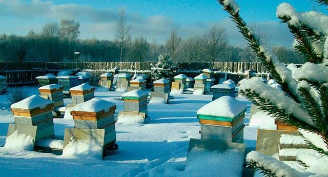 Календарь пчеловода. сентябрь
