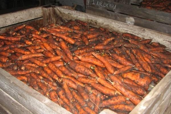 Как хранить морковь в холодильнике: свежую, вареную, очищенную или корейскую, а также как правильно подготовить ее, чтобы она не вяла и не портилась всю зиму?