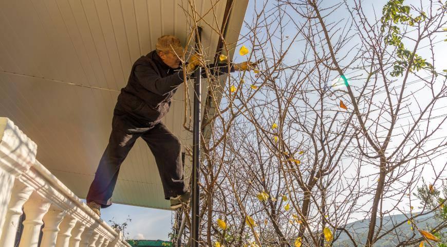 Как правильно обрезать плодовые деревья осенью