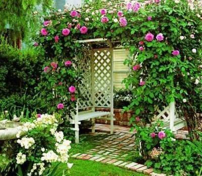 Какие вьющиеся растения посадить у беседки