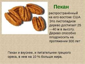 Орех пекан: польза и вред, чего больше