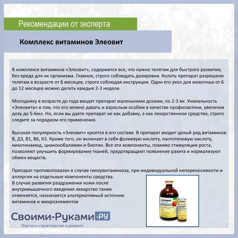 Бронхопневмония телят: признаки и лечение