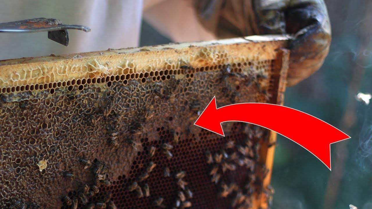Откачка меда - начинающему пчеловоду