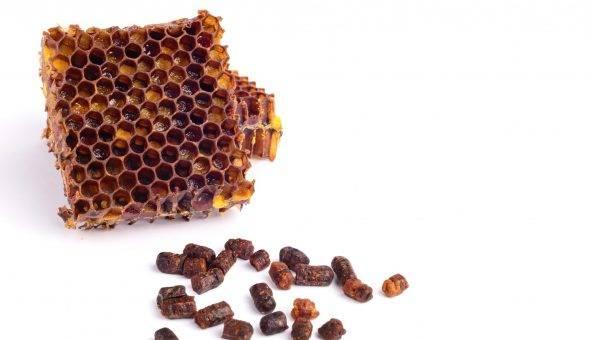 Употребление перги в гранулах