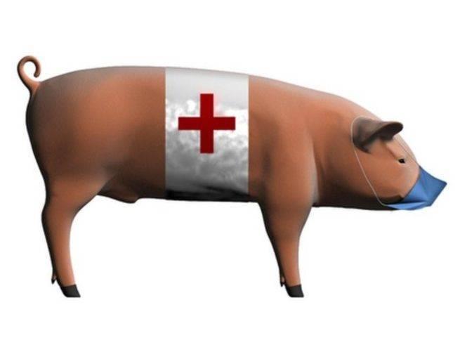 Болезни свиней в небольших хозяйствах - симптомы, лечение, профилактика - agritimes.ru