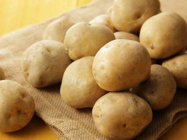 Картофель манифест: освещаем все нюансы