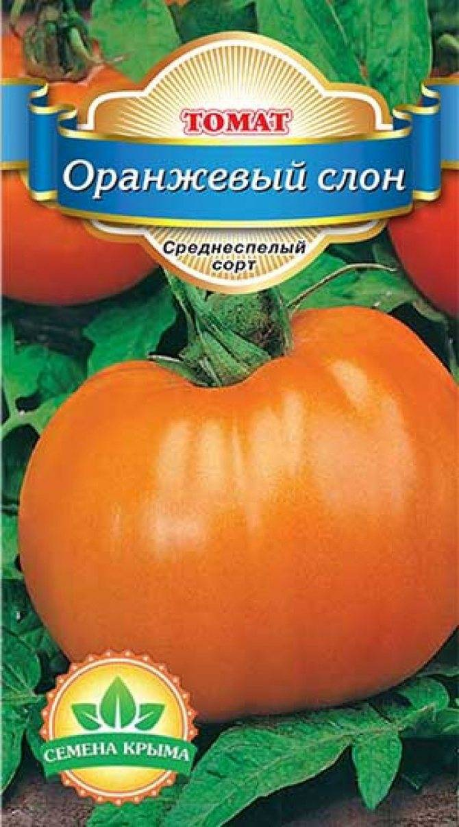 Оранжевый слон — современный сорт томатов российской селекции