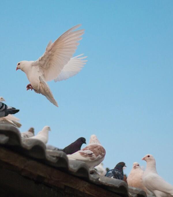 Как избавиться от птиц: рейтинг 17 лучших отпугивателей