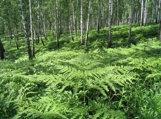 Цветы и растения леса: фото и описания
