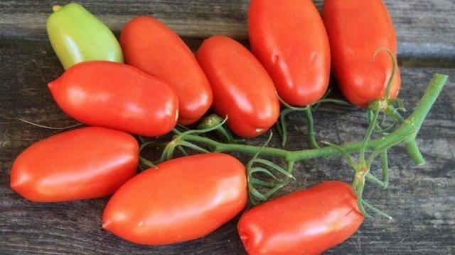 Описание томата царское искушение: урожайность и срок созревания