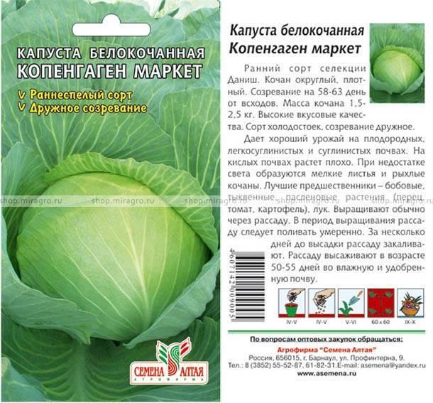 Капуста надежда, описание сорта и особенности выращивания