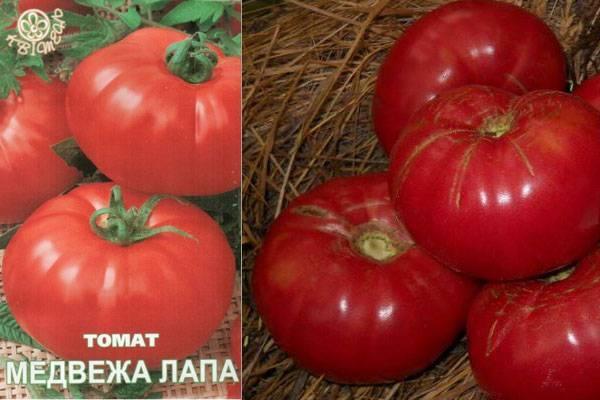 Описание сорта томата «медвежья лапа» и его плюсы