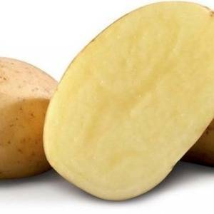 Ранний картофель ривьера — описание усовершенствованного сорта