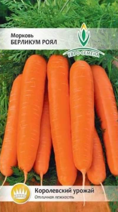 Морковь берликум роял — описание сорта, фото, отзывы, посадка и уход