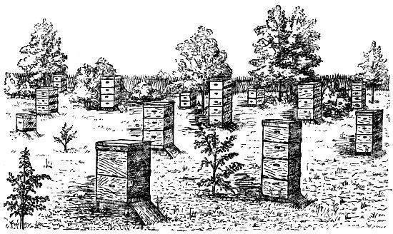 Методы содержания целостных семей пчел в ульях большого объема [1959 ковалев а.м. - уход за пчелами]